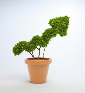 Success Plant